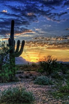 Sunset over the cactus in the desert