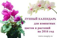 Лунный календарь для комнатных растений и цветов на 2016 год. Благоприятные и неблагоприятные дни для пересадки и размножения, когда сеять семена, черенковать или производить обрезку. А так же дни