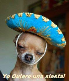 メキシコ犬