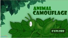 Here you read about #AnimalCamouflage and Mimicry are similarity. Both are types of shapes, colors that trick animals and camouflage hides an animals. For more interacting #Generalknowledge For #Kids, visit: http://mocomi.com/learn/general-knowledge/