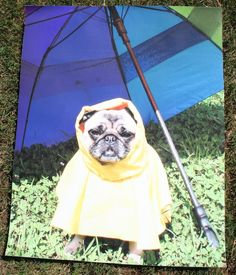 Piggie raincoat print.~ Mod Podge Rocks!