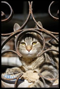 Photo series - Cats of the famous Recoleta Cemetery in Buenos Aires, Argentina - http://travelling-cats.blogspot.be/2014/10/cats-from-buenos-aires-argentina_20.html