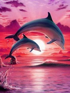Avec la couleur de l'AMOUR, qui est ROSE.....how beautiful, gorgeous this is!  Dolphins are still love....   couchers de soleil et dauphins - Bing Images