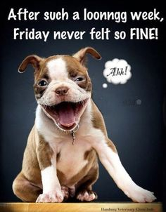 Funny Happy Friday Quotes With Images Tgif, Its Friday Quotes, Friday Humor, Weekend Quotes, Funny Friday, Monday Quotes, Funny Dogs, Funny Animals, Cute Animals