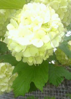 Bright flower.