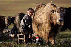 Mongolie : Gérard Planchenault Photographie