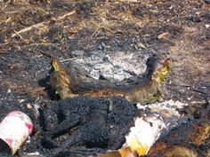 Vesuvio,incendi+dolosi+accertati,gatti+vivi+dati+alle+fiamme+per+propagare+gli+incendi+a+macchia+d'olio