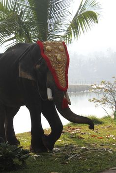 A Decorated Elephant,Kerala - India Elephant World, Elephant Love, Mother India, States Of India, Kerala Tourism, Mughal Empire, Visit India, Kerala India, India Travel