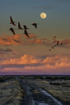 Birds in flight with a full moon!
