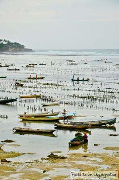 Behind The Lens Lukey: Seaweed farming in Nusa Lembongan