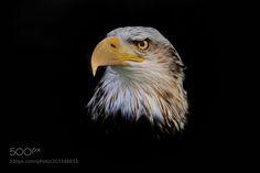 fantasy eagle by aitzaundi via http://ift.tt/2mUScCj
