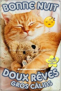 Good Night, Teddy Bear, Messages, Cats, Animals, Smileys, Bouquets, Images, Passion