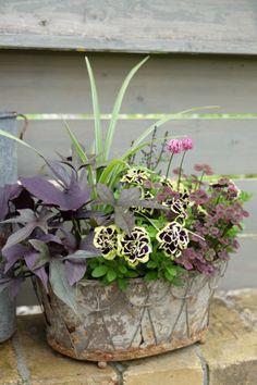 The most awesome Garden bench Contemporary Ideas 7893430926 Container Flowers, Container Plants, Container Gardening, Balcony Plants, Garden Plants, Flora Design, Garden Paving, Pot Plante, Colorful Garden