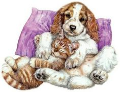 щенки и котята
