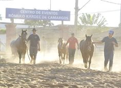 Os crioulos já estão no Parque Fernando Costa