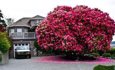16 Of The Most Magnificent Trees In The World | Bored Panda