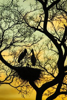 Pantanal - Brasil Foto: Alaor Filho