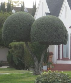 Topiary by katharine