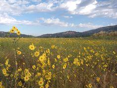 Bear Valley Springs, CA : Late Spring Flowers