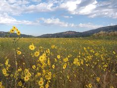 Bear Valley Springs, CA : Late Spring Flowers