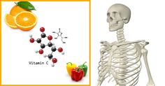 Bones and vitamin C  - It's also good for your skin.