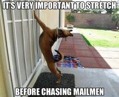 It's very important to stretch before chasing mailmen. #dog #pet #funny #yoga Pet Insurance for Dogs and Cats in Australia - http://www.kangabulletin.com/1300-pet-insurance-australia #pet #insurance #australia #price pet insurance australia and pet insurance dental