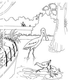 Animal Coloring Pages Farm Pagesk Realistic Free Ocean