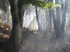 Natura tra boschi, parchi e giardini, foto inviata da Riccardo Meoni per partecipare al concorso Husqvarna. Il Gruppo Husqvarna è il maggior produttore al mondo di attrezzature per il giardino e la foresta tra cui motoseghe, decespugliatori, rasaerba, tosasiepi, Rider e trattori da giardino. www.husqvarna.it