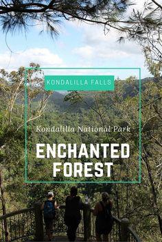 Kondalilla Falls is a lovely spot for a bushwalk in Queensland's Sunshine Coast in Australia