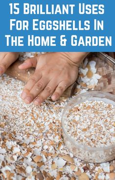 15 Brilliant Uses For Eggshells In The Home Garden + How To Eat Them There's so many clever ways to Garden Yard Ideas, Lawn And Garden, Home And Garden, Planting Vegetables, Growing Vegetables, Egg Shell Uses, Organic Gardening, Gardening Tips, Home Vegetable Garden
