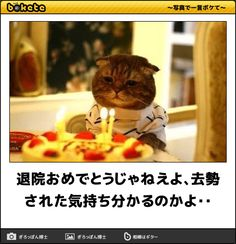Funny Cats, Funny Animals, Japanese Funny, Smiling Cat, Funny Memes, Jokes, Cat Life, Lady, Comedy