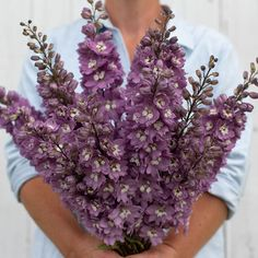 Plant Delphinium seeds for a stately cut flower or to attract pollinators. Field-trialed by our research team for exceptional performance. Delphinium Flowers, Flowers Perennials, Delphiniums, Cut Flower Garden, Flower Farm, Cut Garden, Flower Gardening, All Flowers, Beautiful Flowers