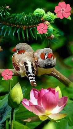 Most recent Totally Free parrot flying Concepts Maintaining ones feathered good friend nutritious usually means consistently checking up on the health. While pet fowl Funny Birds, Cute Birds, Pretty Birds, Small Birds, Colorful Birds, Little Birds, Beautiful Birds, Animals Beautiful, Parrot Flying