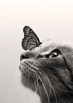 CatButterfly ColorSepia by Dorien Soyez