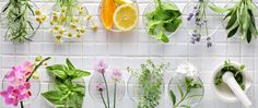 Fresca, vegana, sin conservantes, llena de antioxidantes Fresco, Dandelion And Burdock, Digestive Bitters, Aromatherapy Recipes, Medicinal Herbs, Gut Health, Permaculture, Plant Based, Herbalism