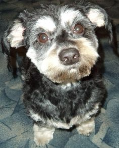 Dogs with allergies can suffer great discomfort if the allergy is not diagnosed and treated in a timely manner.http://dogswithallergies.org/