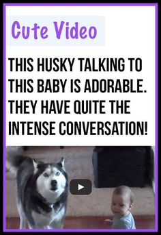 Awww, this siberian husky and baby have so much to say!! #huskies #babies