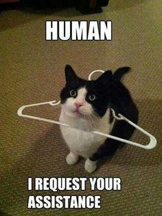The cat vs the hanger