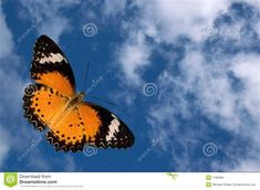Butterfly And Clouds Stock Photo. Image Of Cumulus, Flying