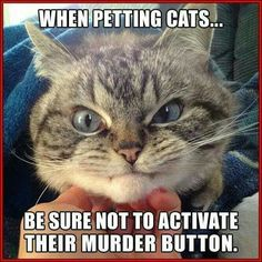 Aww - none of my cats ever had a murder button