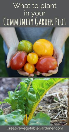 If you grow food a community garden plot here are some special considerations to keep in mind when picking which vegetables you're going to plant. ]