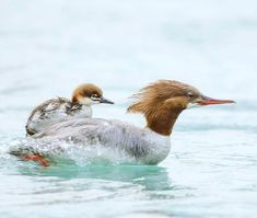 4438 Best Animal Moms and their Babies images in 2019