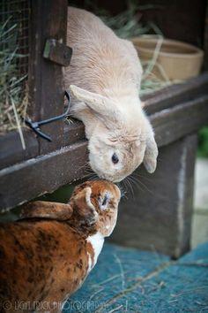 Bunny kisses...