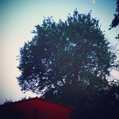 La luna su villa selva!! #villaselva #countryhouse #countrylife #ristorante #umbria #umbrialovers #umbriaturism #grutti #santerenziano #gualdocattaneo #todi #bevagna #montefalco #food #foodlovers #organicfood #healthyfood #foodandwine #wine #winelovers !!