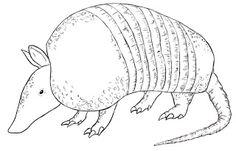 How To Draw An Armadillo - Draw Central