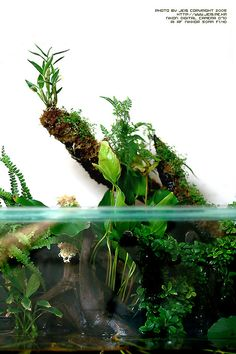Perfect for small orchids on the branch. Aquarium Terrarium, Aquarium Setup, Aquarium Ideas, Terrarium Diy, Planted Aquarium, Aquarium Fish, Aquatic Plants, Air Plants, Goldfish Tank