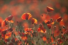 Red Spring (XII) by Camilo Margelí on 500px