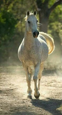 Beautiful speckled horse