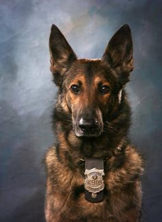 K-9 Hero. THIS is true loyalty. His eyes tell it all.