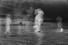Whales: Photo by Christopher Swann: http://www.oceanus.uk.com/christopher.html